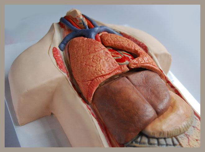 korpus_anatomiczny_2.jpg
