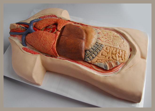 korpus_anatomiczny_4.jpg