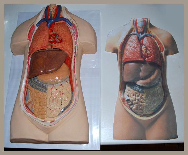 korpus_anatomiczny_5.jpg